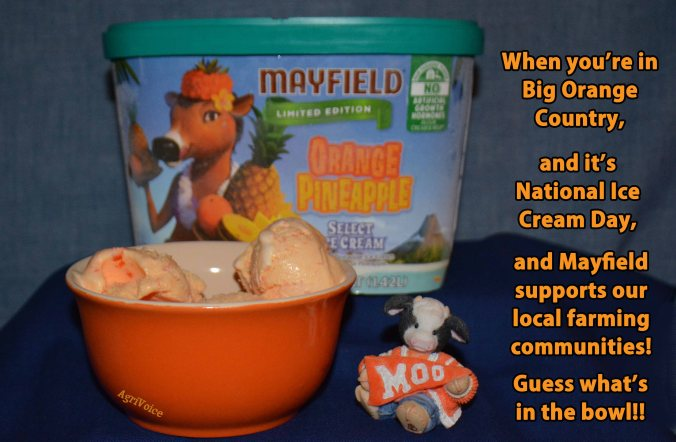 1345_Mayfield_Ice_Cream_Orange_AgV