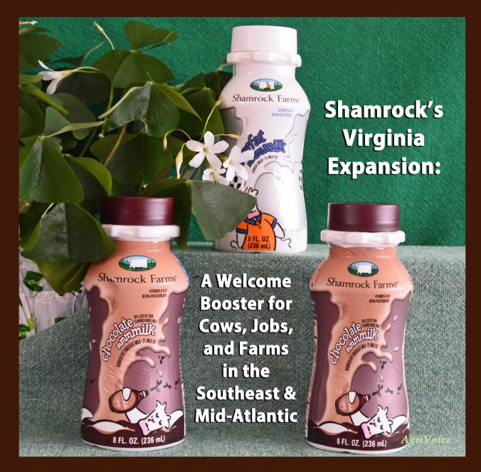 8448_Shamrock_Brown_F