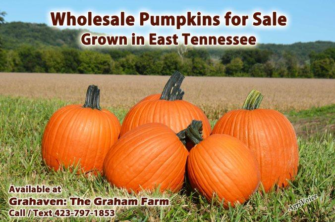 508_Pumpkins_Wholesale_Ad_F